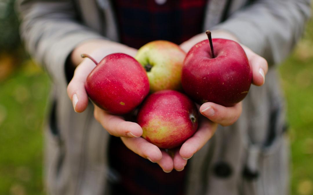 Quelles pommes utilisons-nous pour le Hard Cider ?